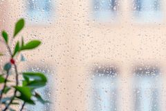 Raindrops on the glass. Blurred green home plant on the left side. On a rainy day a drop of water is on the window glass. Blurred green home plant on the left royalty free stock photo