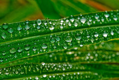 Raindrops on Grass #2. Water droplets on leaves in Rockhampton, Central Queensland , Australia stock photo