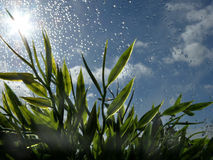 Raindrops and Grass. A view of raindrops on window glass with a sunny sky and grass in the background Stock Photos