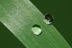 Raindrops on grass Stock Photo