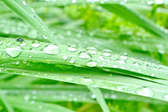 Raindrops on grass Royalty Free Stock Images