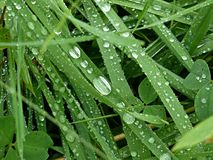 Raindrops on the grass Stock Photography