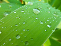 Raindrops on green grass Royalty Free Stock Photos
