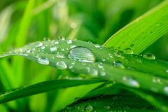 Raindrops on green grass macro. Drops of rain on the green grass close-up, after rain lush grass Stock Images
