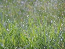 Raindrops. Green grass with rain drops Stock Images