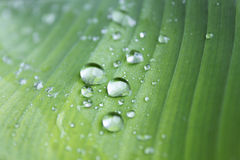 Raindrops on a green leaf Stock Photos