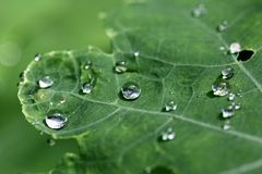 Raindrops on a green leaf Stock Photo