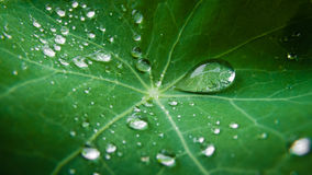 Raindrops radial green leaf Royalty Free Stock Image