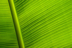 Raindrops on a green leaf. Rain drops on a green leaf in a forest Stock Photo