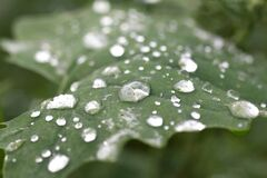 Raindrops on green leaf Royalty Free Stock Photos