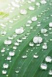 Raindrops on green leaf Stock Photos