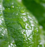 Raindrops on a green  leaf Stock Images