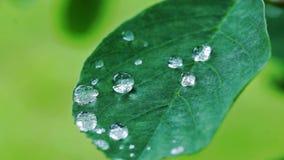 Raindrops on green leaf stock video