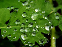 Raindrops on a green leaf of a plant Royalty Free Stock Image