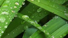 Raindrops on Green Spring Grass stock video