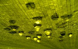 Raindrops on a green texture. Stock Photography