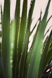 Raindrops on greenery Royalty Free Stock Photos