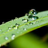 Raindrops Keep Falling Royalty Free Stock Images