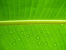 Raindrops on a leaf. Under sunshine stock photography