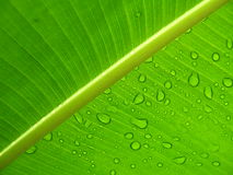 Raindrops on a leaf. Raindrops on a green leaf under sunshine stock photos