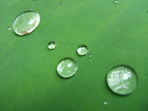 Raindrops on a leaf. Droplets on a green leaf royalty free stock photo
