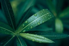 Raindrops on a leaf. Early morning after rain, waterdrops Royalty Free Stock Photography