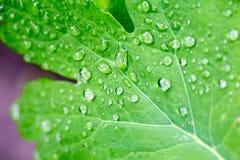 Raindrops on a leaf. Close-up macro Stock Image