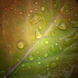 Raindrops on leaf Royalty Free Stock Image