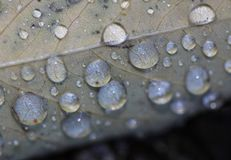 Raindrops on leaf royalty free stock photo