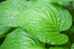Raindrops on leaf Royalty Free Stock Photos