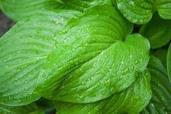 Raindrops on leaf Stock Image