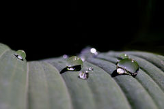 Raindrops on leaf Royalty Free Stock Photos