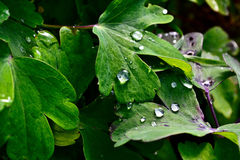 Raindrops on leaf. Picture of raindrops sitting on leaf Stock Image