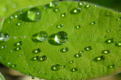 Raindrops on leaf. After rain Royalty Free Stock Images