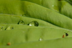 Raindrops on leaf. After rain Royalty Free Stock Photos