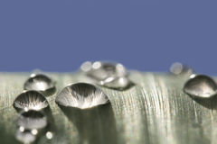 Raindrops on leaf after rain. With clear sky Royalty Free Stock Photo