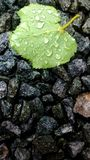 Raindrops on leaf. Rain drops on green leaf with stone background Royalty Free Stock Photography