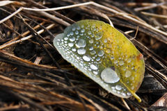 Raindrops on a leaf Royalty Free Stock Photos