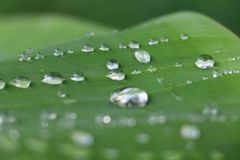 Raindrops on a leaf. These raindrops were glimmering on a leaf after a rainy morning Royalty Free Stock Images