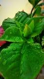 Raindrops on leaf Stock Photography