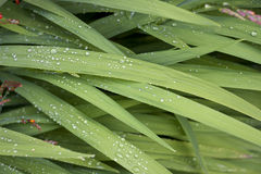 Raindrops on leaves Stock Photography
