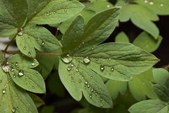 Raindrops on leaves Stock Photos