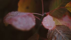 Raindrops on leaves and flowers. Rain. Rain drops on leaves, bushes and grapes stock video footage
