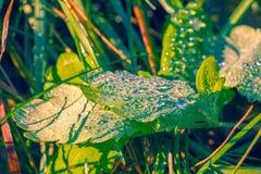 Raindrops on leaves Stock Image