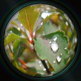 Raindrops on leaves in objective lens Royalty Free Stock Images