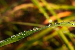 Raindrops line up on blade of grass stock photo