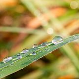 Raindrops on blade of grass royalty free stock photos