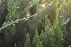 Raindrops na gałąź Obrazy Royalty Free