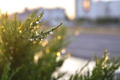 Raindrops na gałąź Obraz Royalty Free