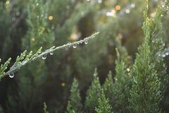 Raindrops na gałąź Zdjęcia Royalty Free